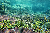 Malaysia, South China Sea, Tioman Island, Coral reef - DSGF000306