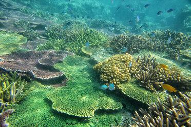 Malaysia, South China Sea, Tioman Island, Coral reef - DSGF000810