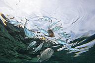 Malaysia, fish swimming in water - DSGF000314