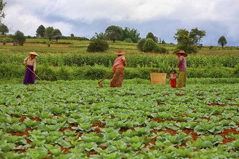 Myanmar, Kalaw, women working on field - DSG000338