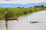 Myanmar, woman with child on boat and ducks on Inle Lake - DSGF000341
