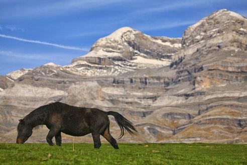 Spain, Ordesa National Park, horse on mountain meadow at Monte Perdido massif - DSGF000433