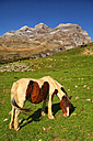 Spain, Ordesa National Park, horse on mountain meadow at Monte Perdido massif - DSGF000440