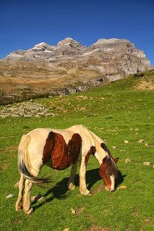 Spain, Ordesa National Park, horse on mountain meadow at Monte Perdido massif - DSGF000440