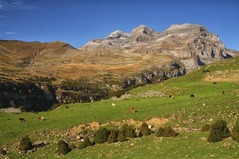 Spain, Ordesa National Park, horses on mountain meadow at Monte Perdido massif - DSGF000442