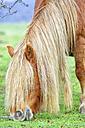 Spain, Navarra, Nature Park Urbasa-Andia, Sierra de Urbasa, grazing horse - DSGF000369