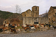 Spain, Province of Huesca, goats running in a mountain village - DSGF000458