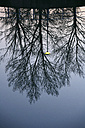 Spain, Ordesa National Park, bare trees reflected in River Cinca - DSGF000541