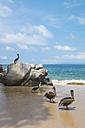 Mexico, Banderas Bay, Pelicans - ABAF001502