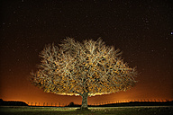 Spain, Urbasa-Andia Natural Park, Tree under starry sky at night - DSGF000693