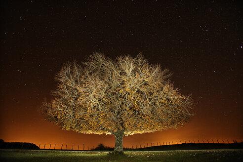 Spain, Urbasa-Andia Natural Park, Tree under starry sky at night - DSGF000693