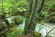 Spain, Urbasa y Andia Natural Park, Urederra river flowing between trees - DSGF000620
