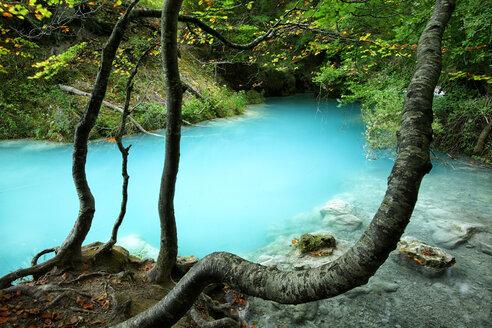Spain, Urbasa y Andia Natural Park, Urederra river flowing between trees - DSGF000626