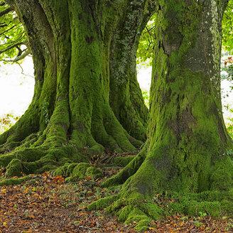 Spain, Trees at Urkiola Natural Park - DSGF000700