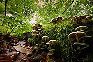 Spain, Urkiola Natural Park, Fungi growing on tree trunk - DSGF000713