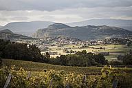 France, Savoy, Jongieux, Rhone Valley, Vineyards in late summer - SBDF001296