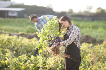 Young woman and man working on field - ZEF001205