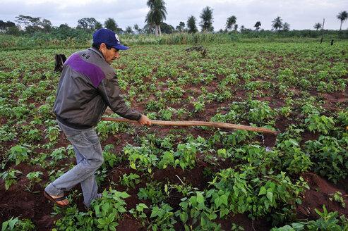 Paraguay, Departamento Concepcion,  Comunidad Arroyito, peasant working on bean field - FLK000511