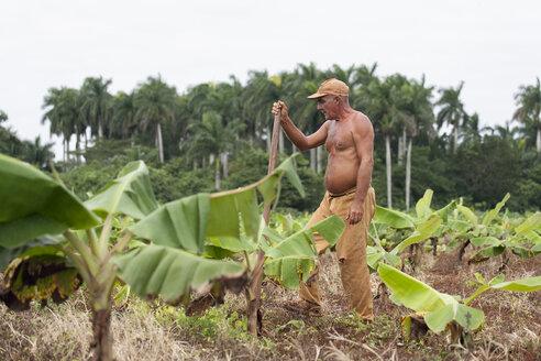 Cuba, Matanzas, Jaguey Grande, working farmer - NN000073