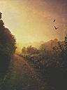 Path at sunset - DWI000265