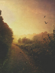 Path at sunset - DWI000265
