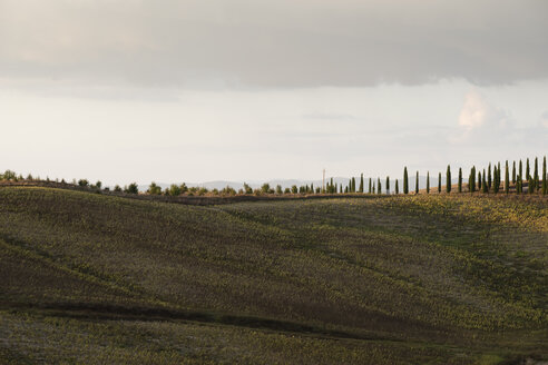 Italy, Tuscany, Siena Province, Crete Senesi, View to avenue lined by cypress trees - MYF000592