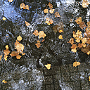 Puddle on pavement with utumn leaves - GWF003193