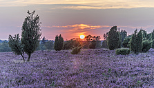 Germany, Lower Saxony, Heath district, Lueneburg Heath at sunset - PVCF000129