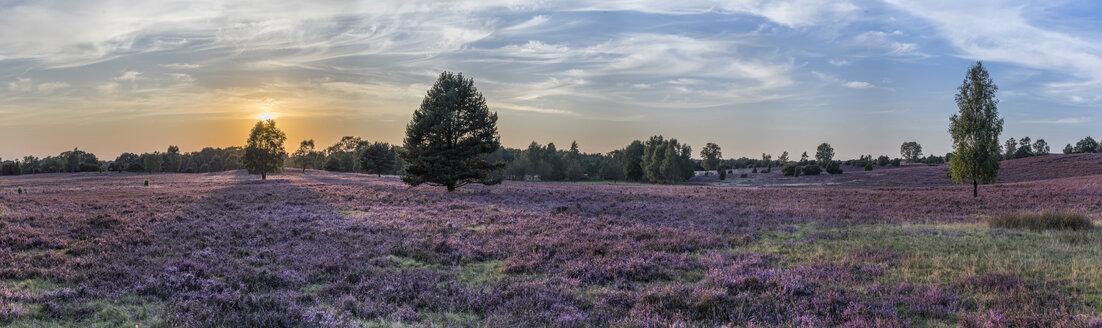 Germany, Lower Saxony, Heath district, Lueneburg Heath - PVCF000134