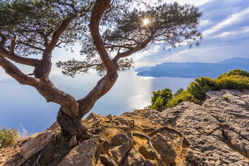 France, Provence-Alpes-Cote d'Azur, Bouches-du-Rhone, Mediterranean coast, near La Ciotat and Cassis, Corniche des Cretes, Tree against the sun - WDF002647