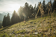 Austria, Tyrol, Tannheimer Tal, young man hiking in sunlight on alpine meadow - UUF002149