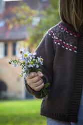 Little girl's hand holding bunch of wild chrysanthemum - LVF002060
