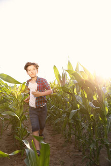Little boy running through maize field at backlight - FKIF000063