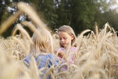 Two girls playing in a cornfield - FKIF000068