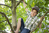 Portrait of little boy climbing in a tree - FKIF000044