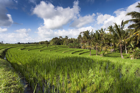 Indonesia, Bali, View to rice fields - NNF000048