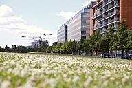 Germany, Berlin, summer meadow near Potsdam Square - FKF000730