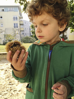 Boy looking at chestnut shell - AF000143