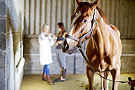 Horse in stable with teenage girl and veterinarian in background - ZEF001733