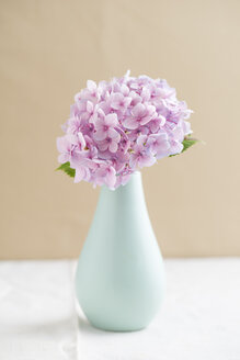 Flower vase with blossom of pink hydrangea - ECF000736