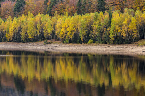 Germany, Bavaria, Bavarian Forest National Park, Drinking water reservoir Frauenau in autumn - STSF000546