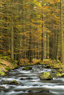 Germany, Bavaria, Bavarian Forest National Park, Kleiner Regen River near Frauenau in autumn - STSF000547