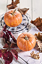 Two miniature pumpkins, Cucurbita pepo, and autumn leaves in front of white background - SBDF001380