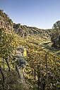 Germany, Baden-Wuerttemberg, Muehlhausen, vineyard in autumn - SBDF001405