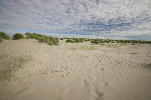 Netherlands, Neeltje Jans, Dunes in the evening - MYF000665