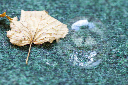 Autumn leaf and soap bubble on a carpet - JFEF000516