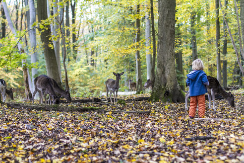 Little girl watching roe deer in a game preserve - JFEF000521