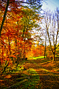 Germany, Odenwald, forest path in autumn - PUF000206
