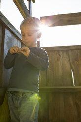 Little boy plaing in tree house - OJF000077