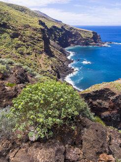 Spain, Canary Islands, La Palma, Punta del Puerto Viejo, Cliff coast near Garafia, Euphorbia in the foreground - AMF003184